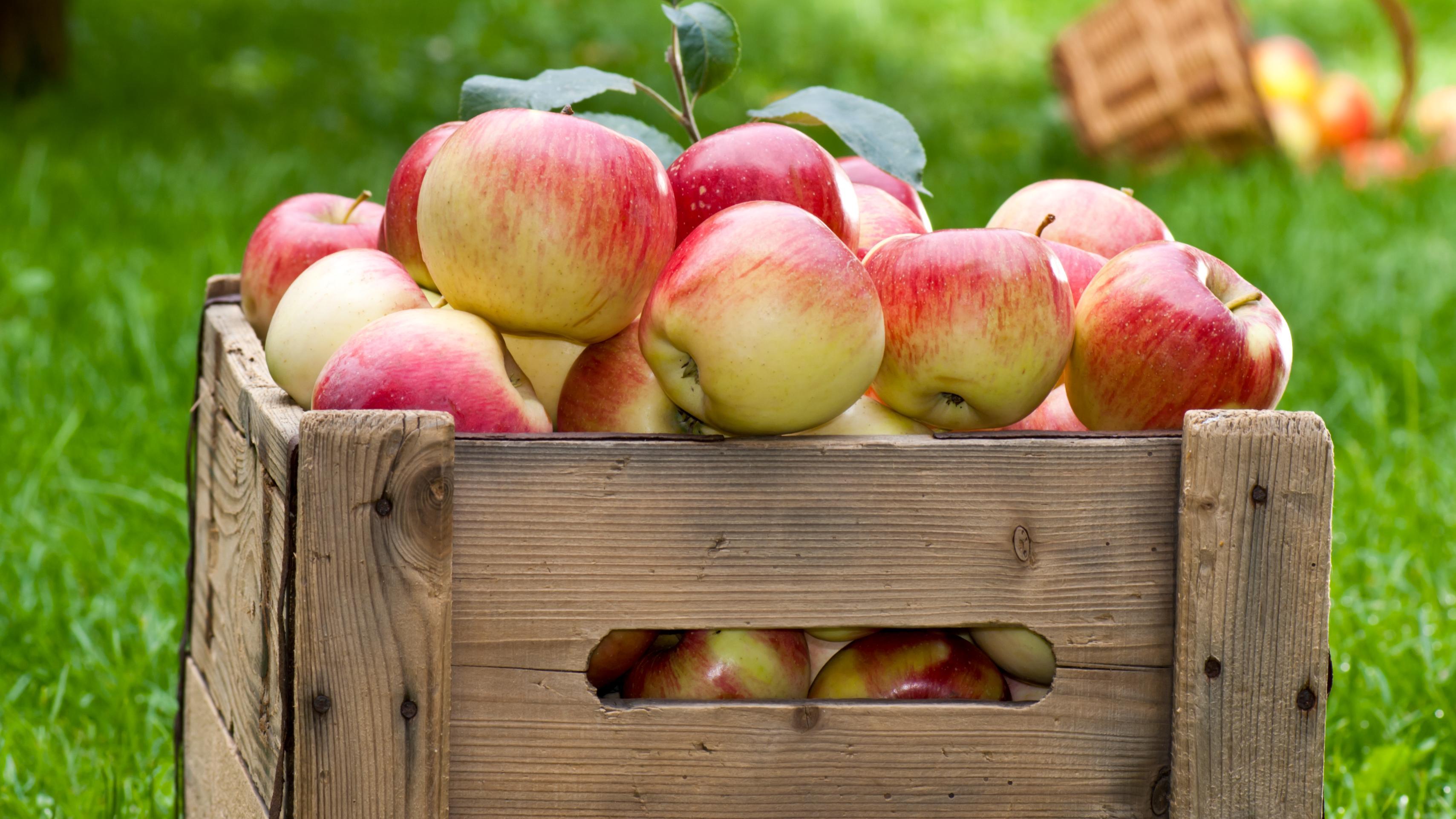 Brevkasse: Hvordan skal jeg opbevare mine æbler? | Lev nu | DR