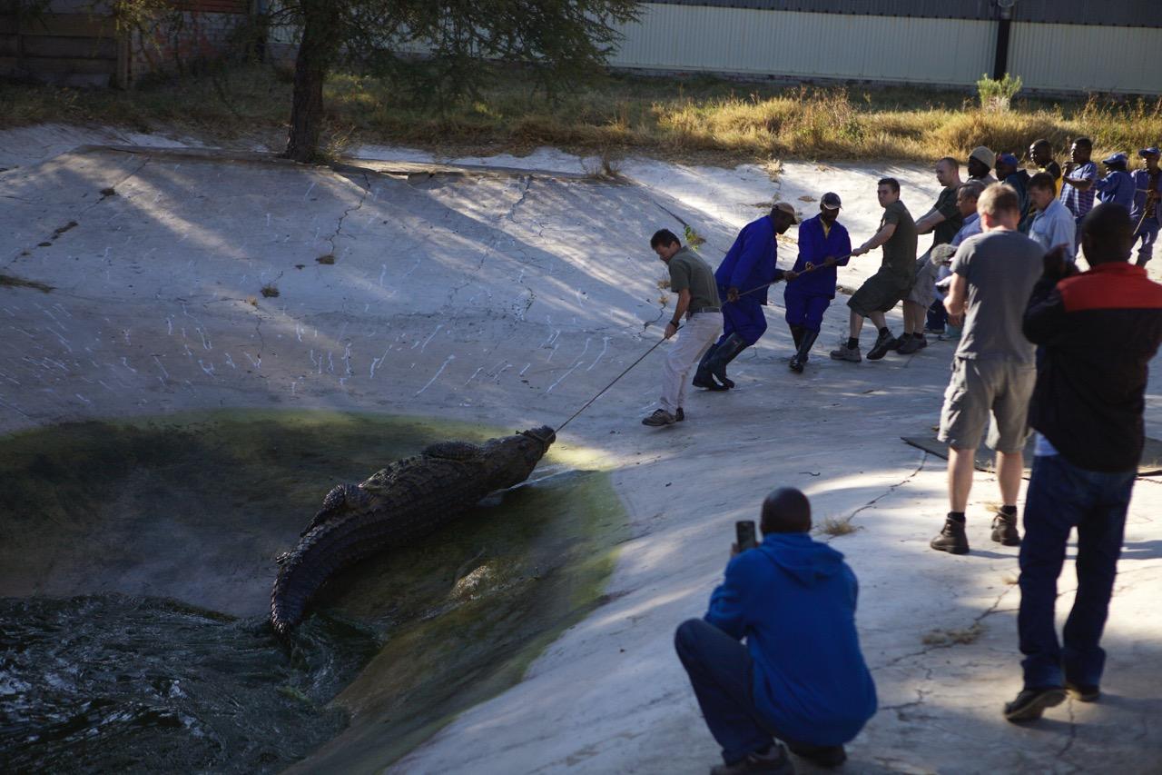 sobek krokodille