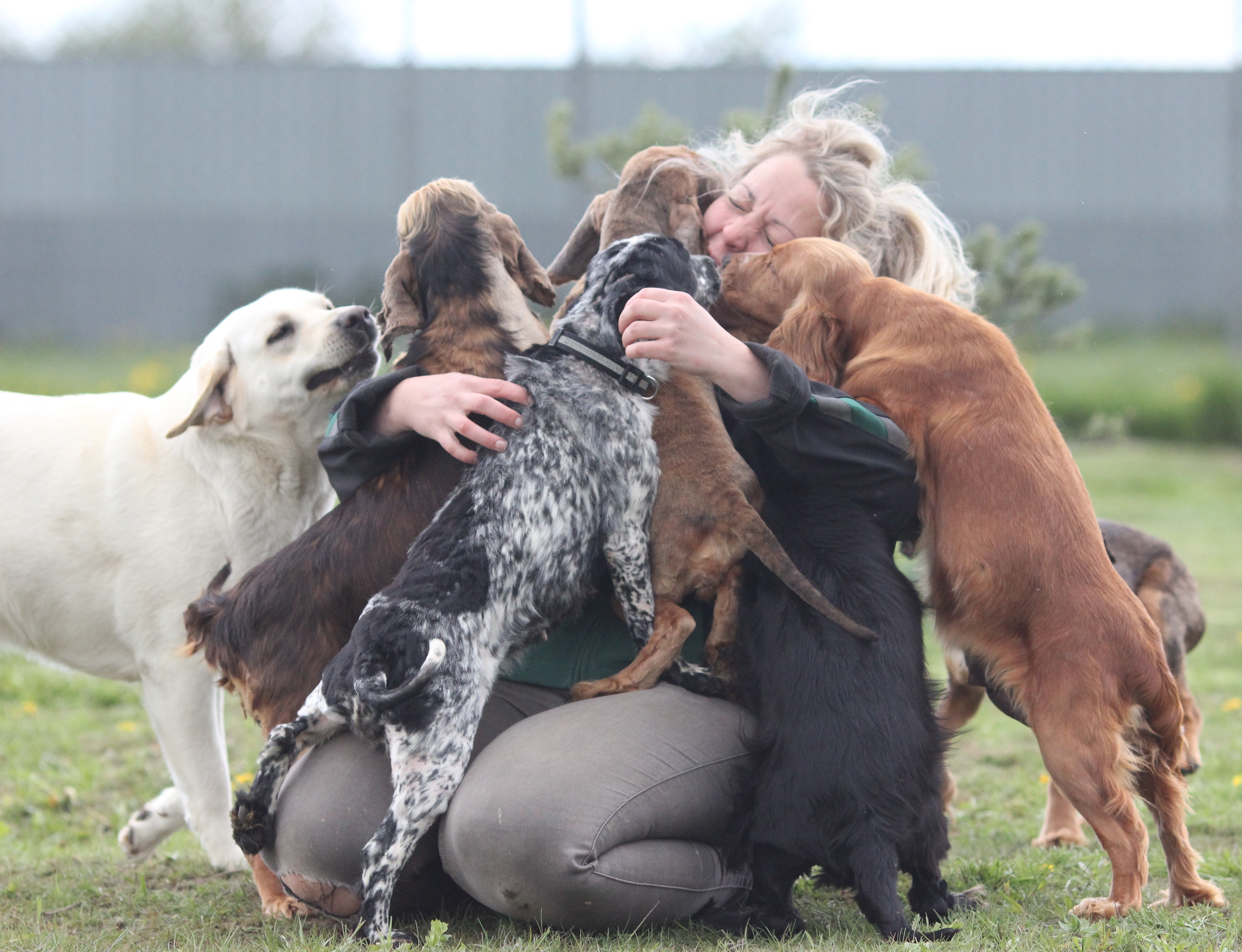 dyreinternat hunde københavn