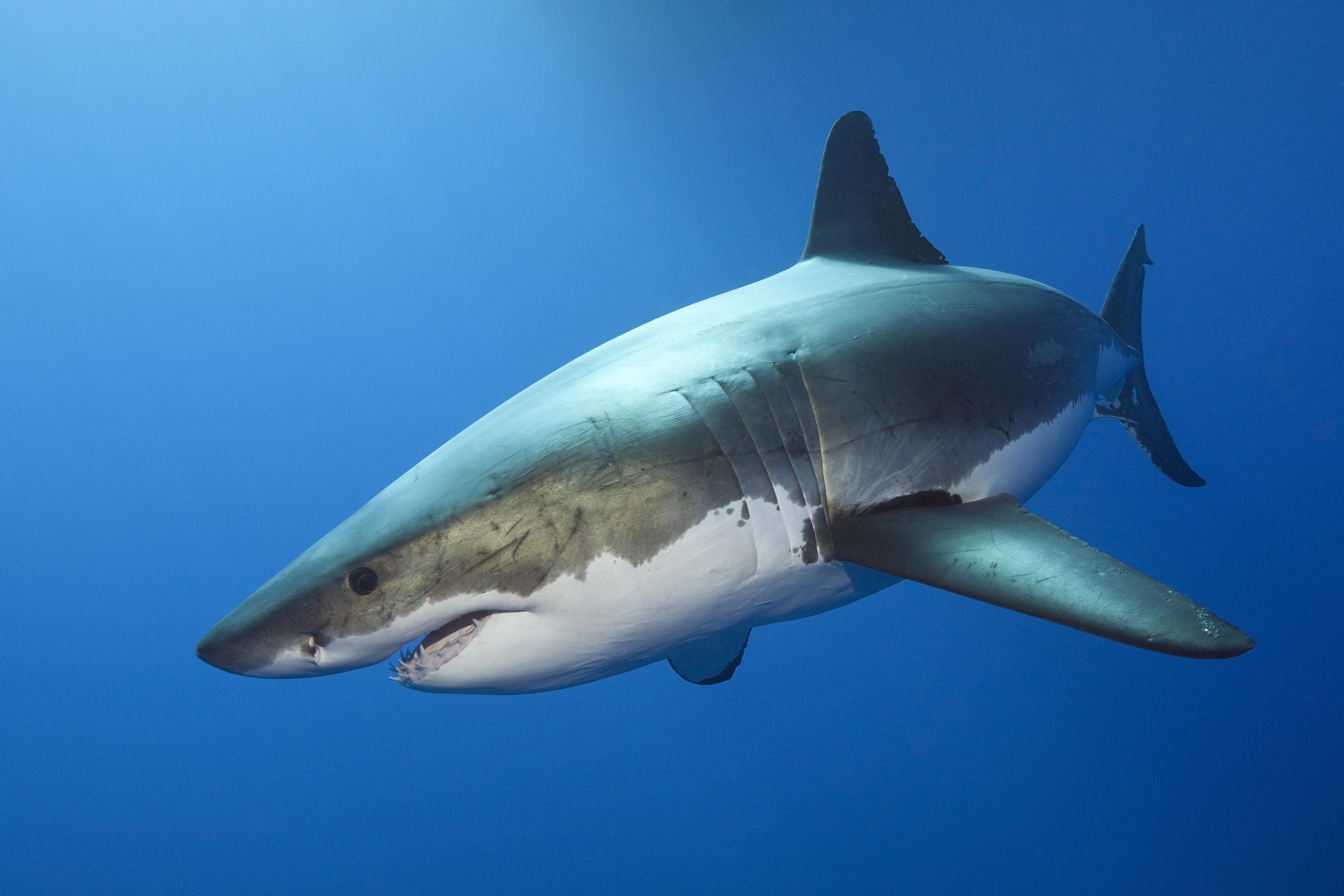 Kvinde så sin far blive dræbt af haj ved Tasmanien | Udland | DR