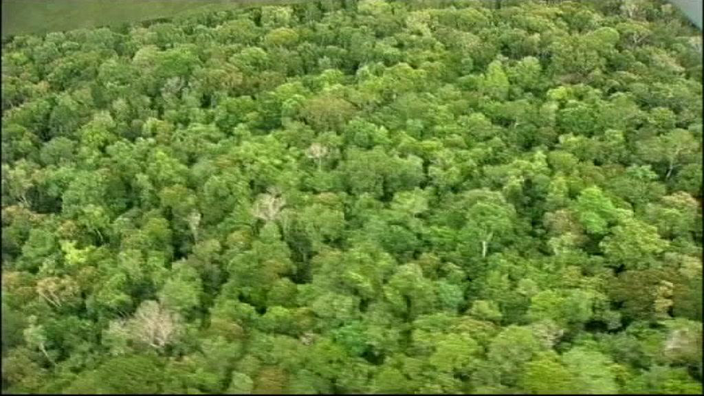 skove.jpeg
