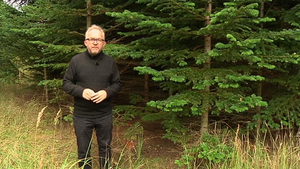 Theilgaard skov