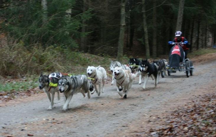 hundeslæde på vogn