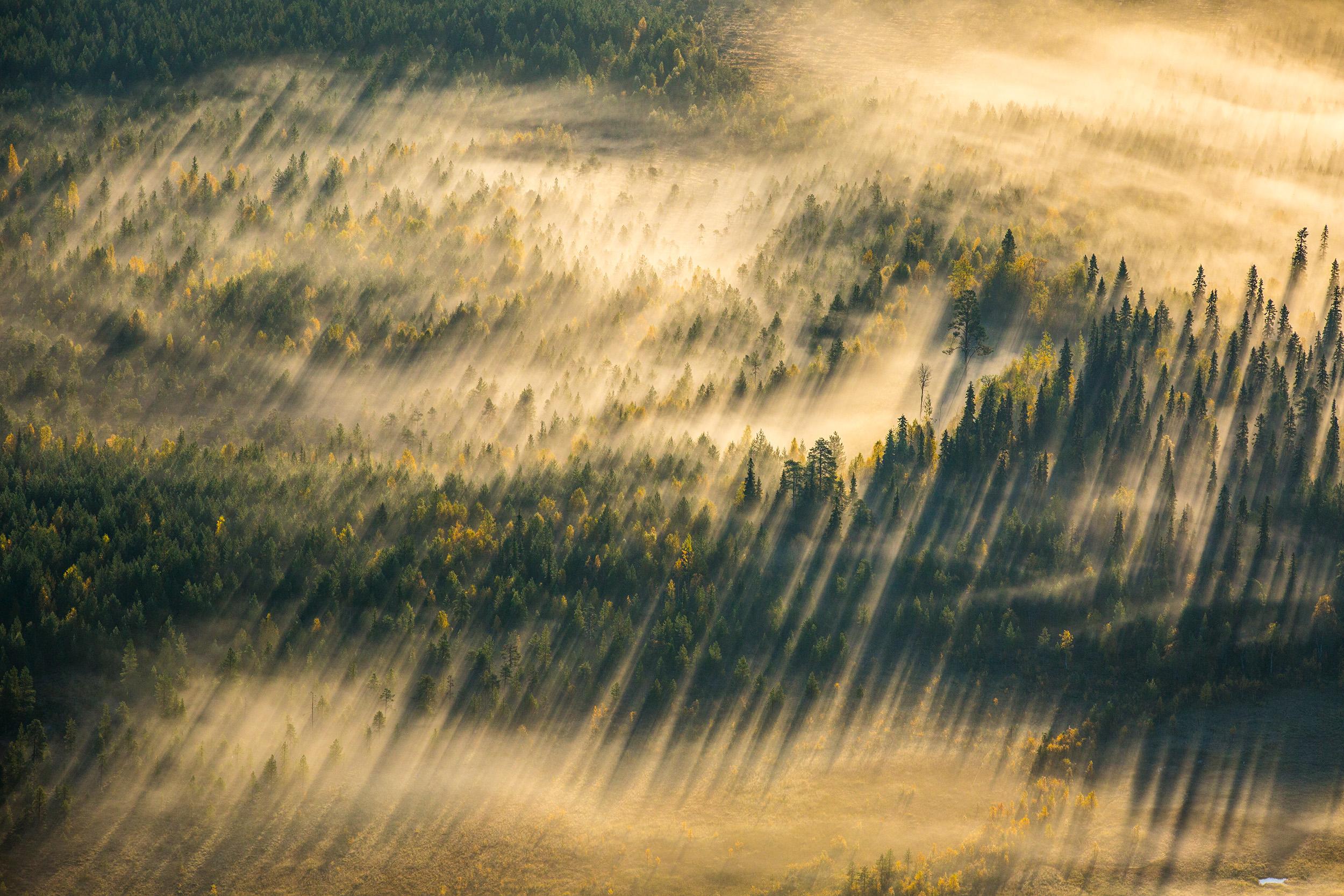 05_boreal_skov_finland_02.jpg