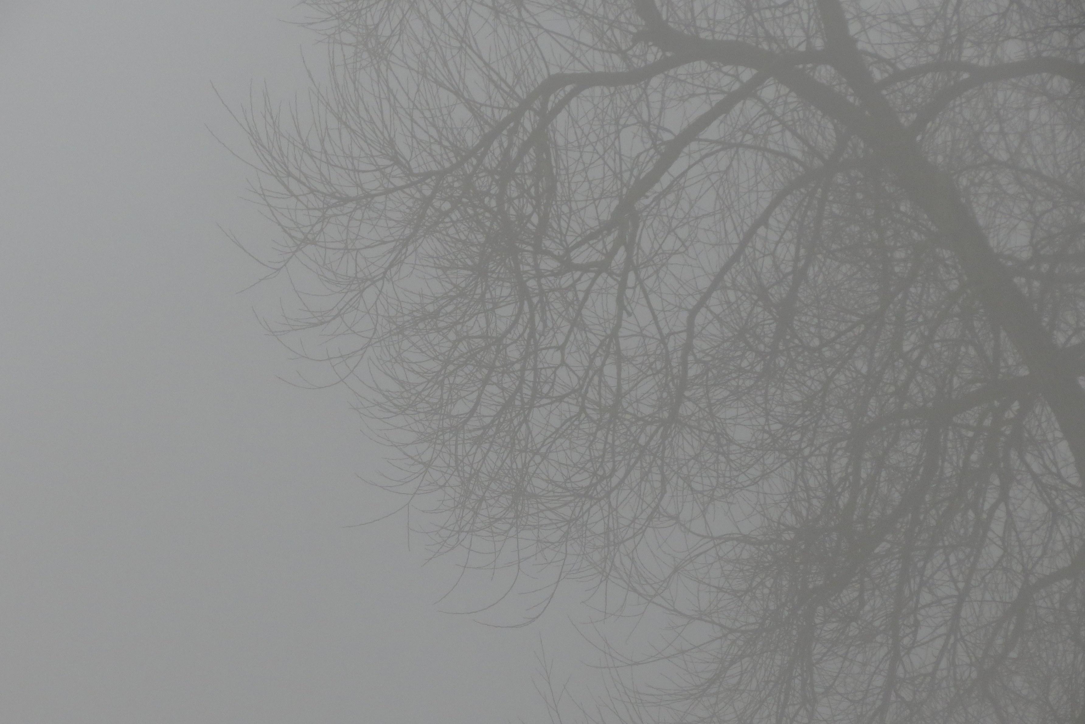 Tåge i Fuglebjerg