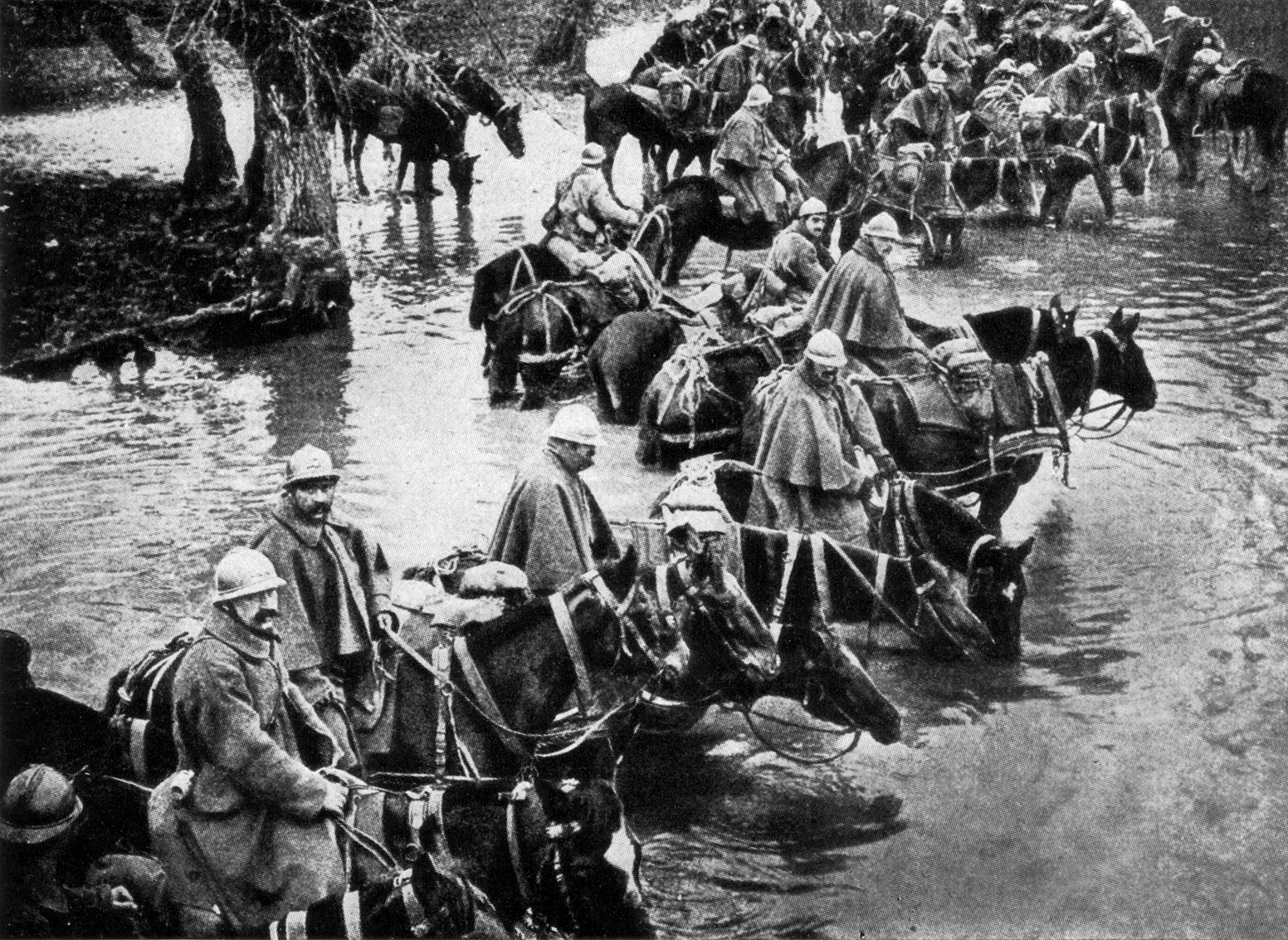 french_train_horses_resting_in_a_river_on_their_way_to_verdun.jpg