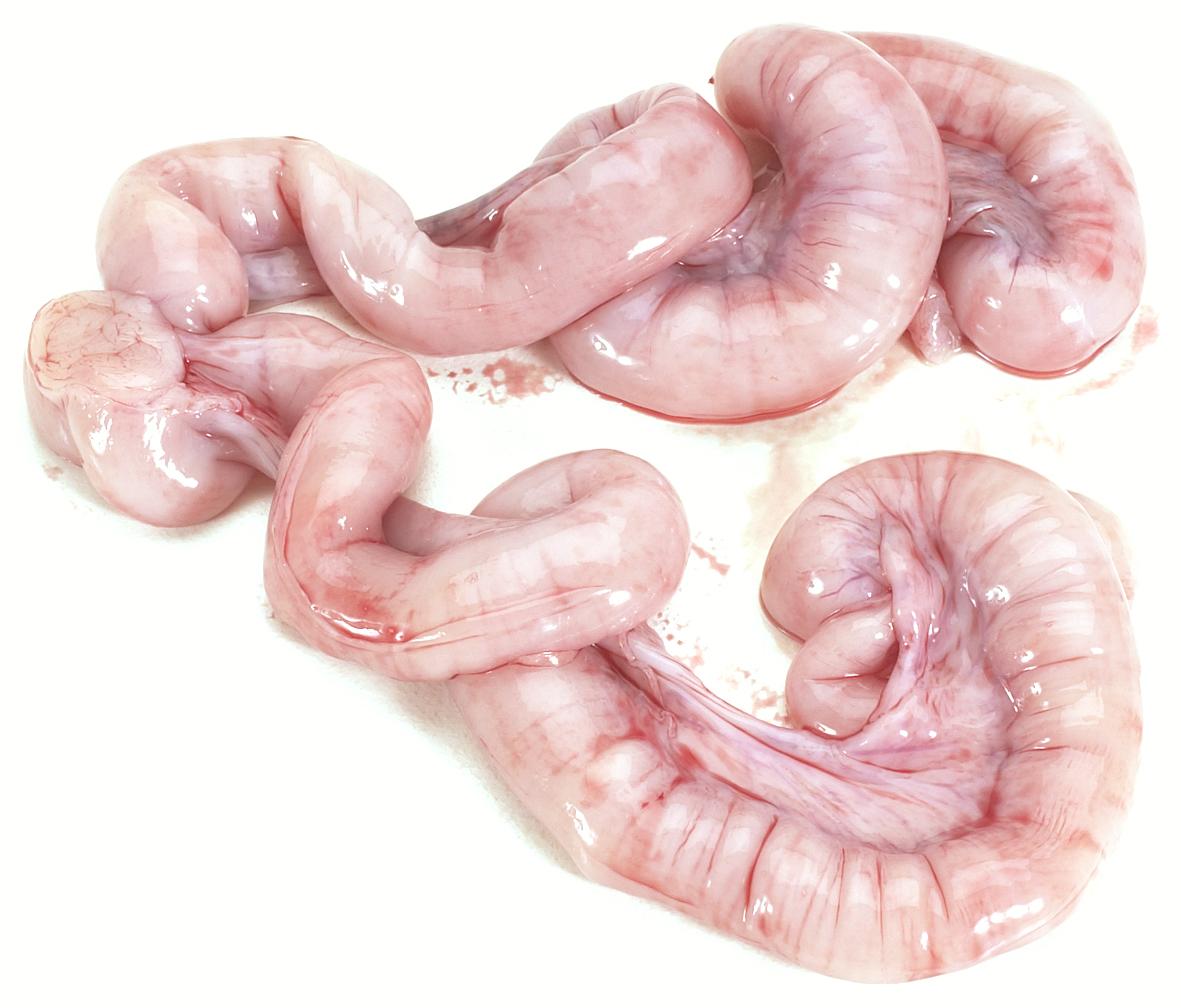 grise-livmoder.jpg