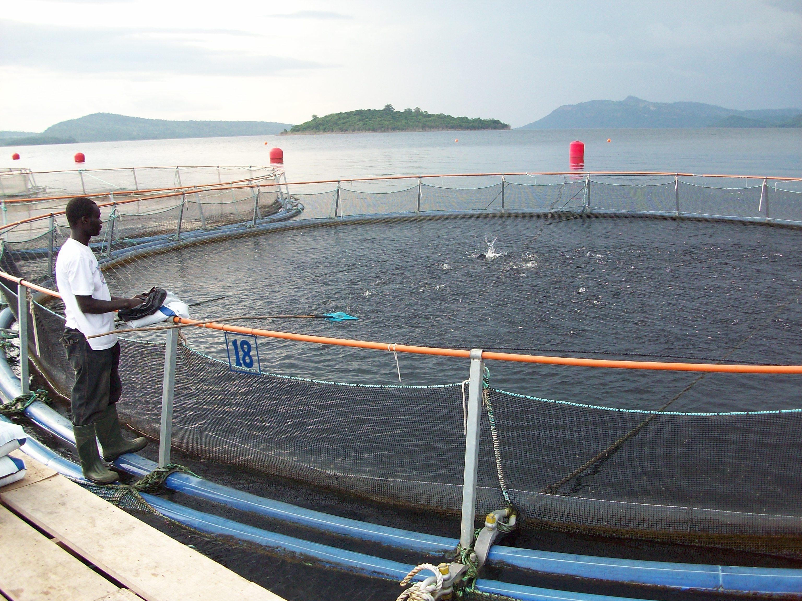 Fisk Ghana