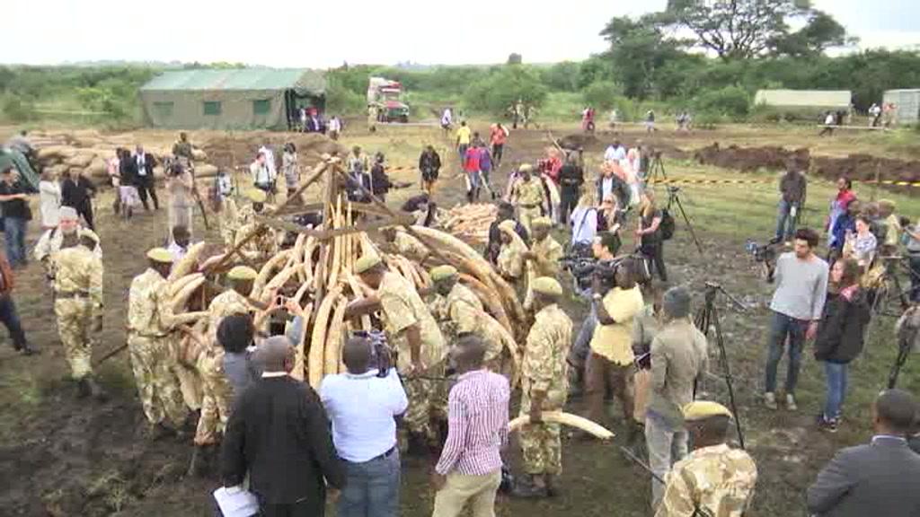 Kenya brænder 150 ton elfenben i kampen mod krybskytteri