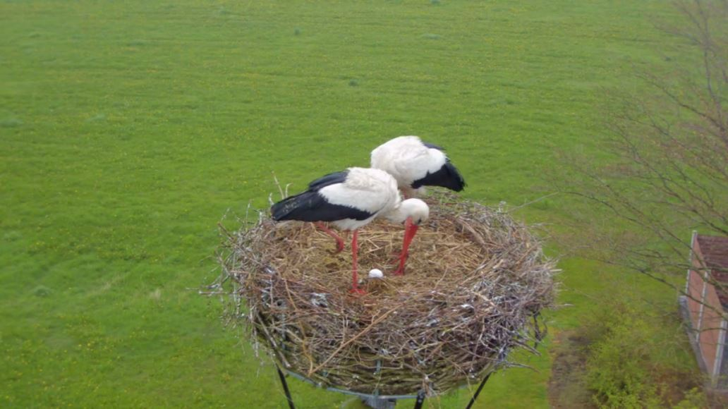 storke.jpg