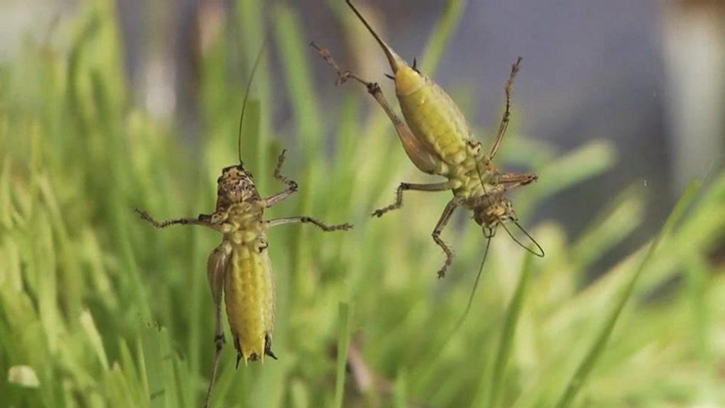 israel-insectsfood_00004012.jpeg