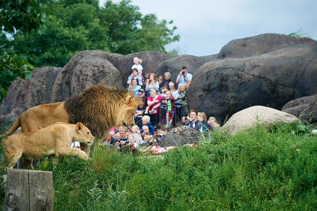 150707_odense_zoo_undervisning_0156_1200px.jpg