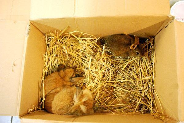 Efterladte dyr, kanin, chinchilla