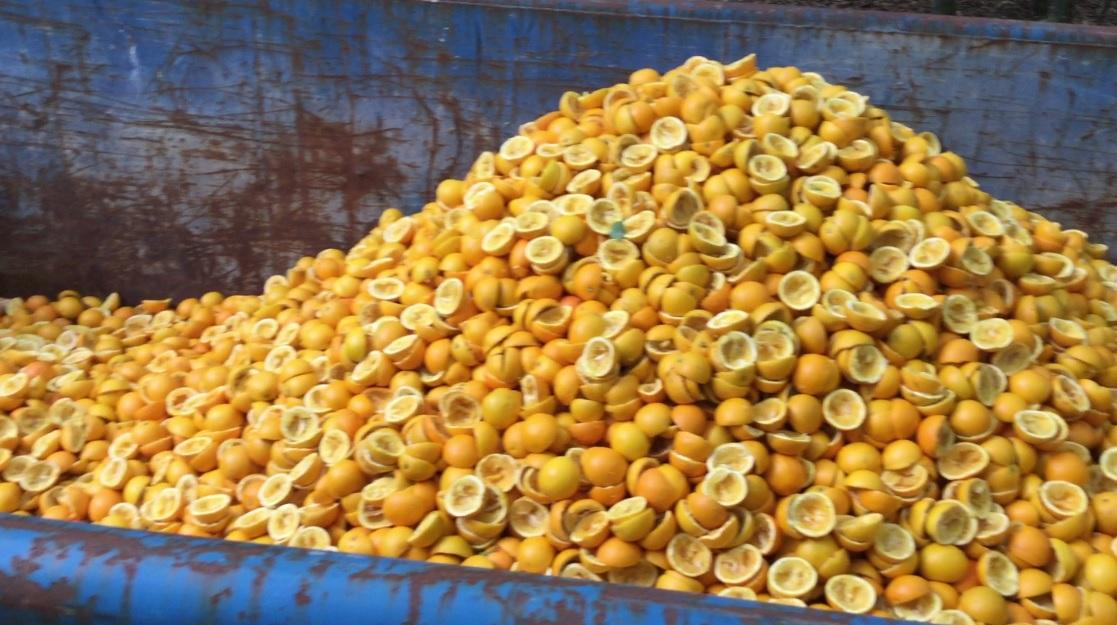 appelsinerbillede2.jpg