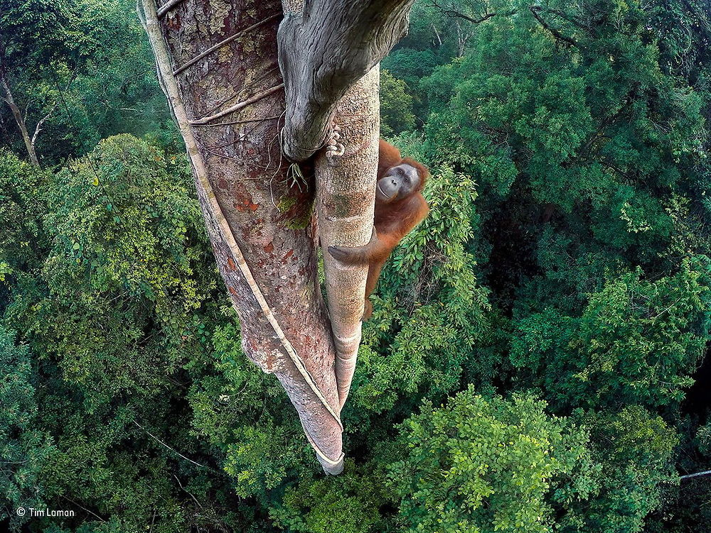 Wildlife Photography of the Year 2016 3