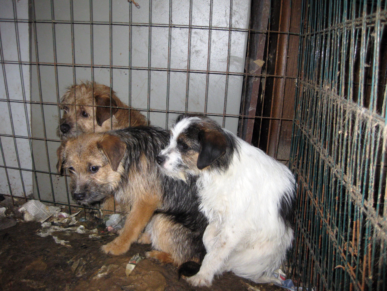 Vanrøgtede hunde 10.02.17_04.jpg