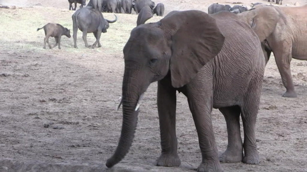 kenya_wildlife_census_00012314.jpeg