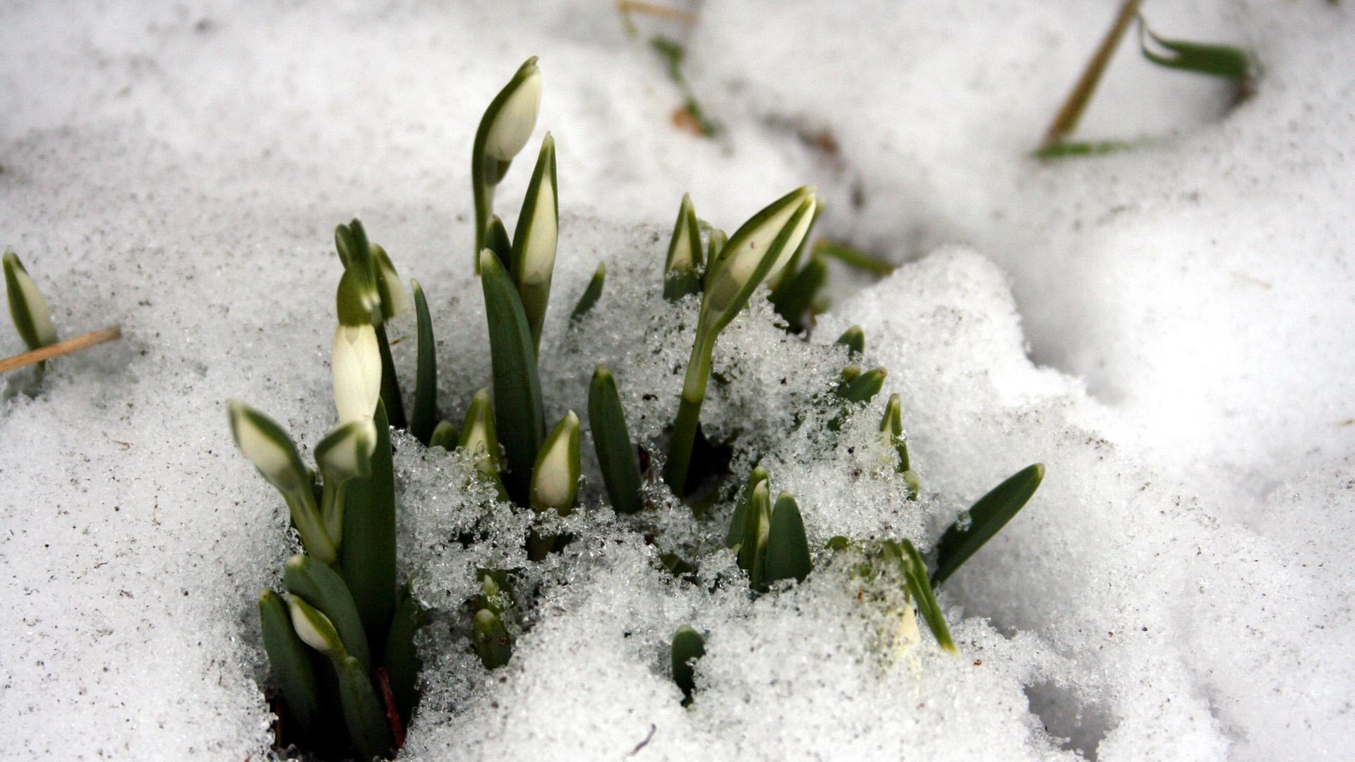 Tøsne og forår