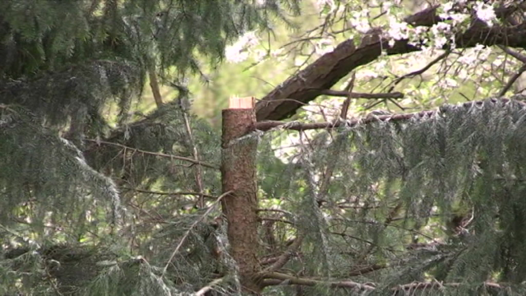 9292998_kgra_pl_minister_trees_felled-10.30.55.12.jpeg