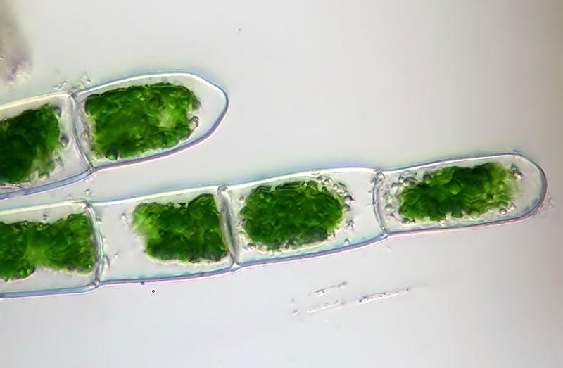 alge.jpg