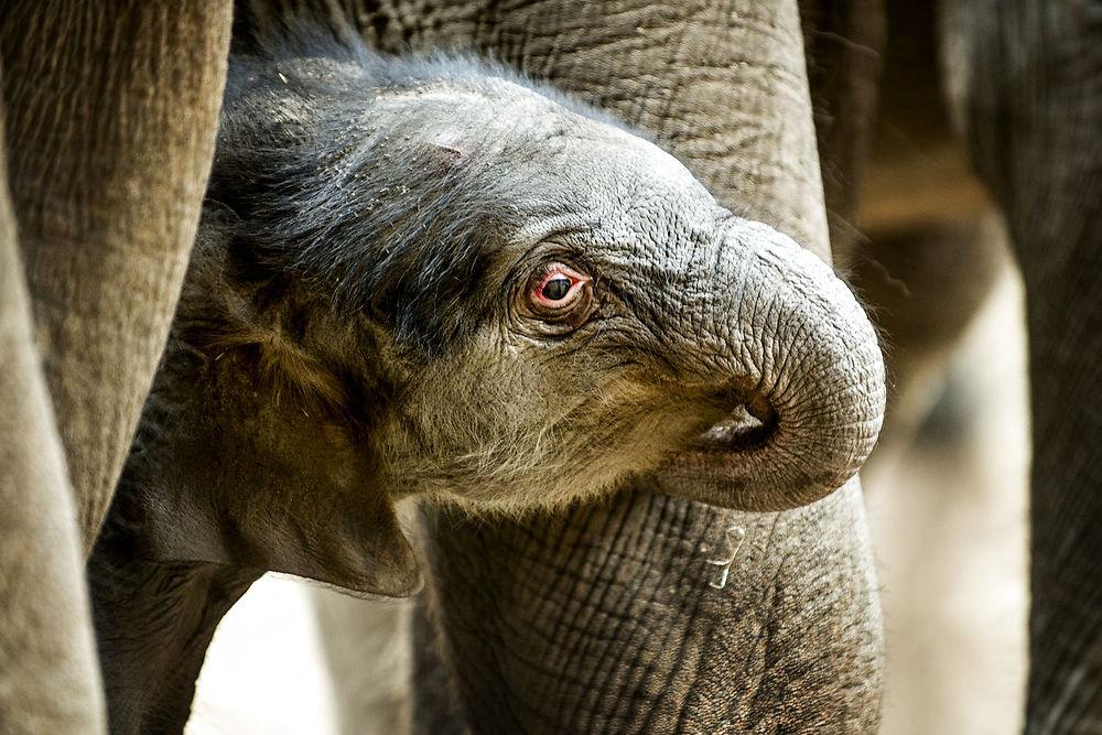 elefantungenkhaoso2013scanpix.jpg