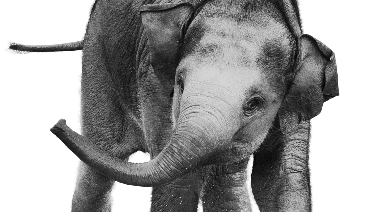 grafik_elefant_foedsel_topbillede_v005