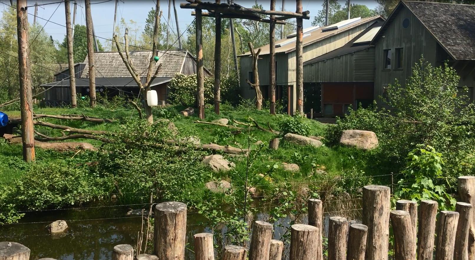Chimpanseanlæg Odense Zoo