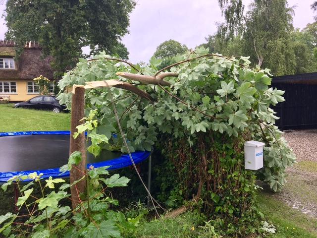 Træ knækket af vindstød