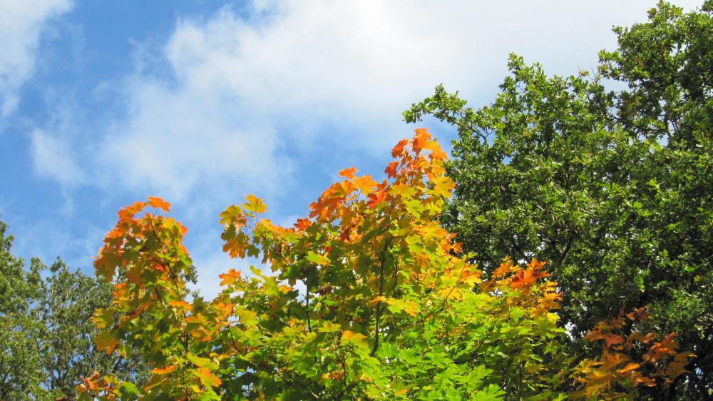 Begyndende efterår