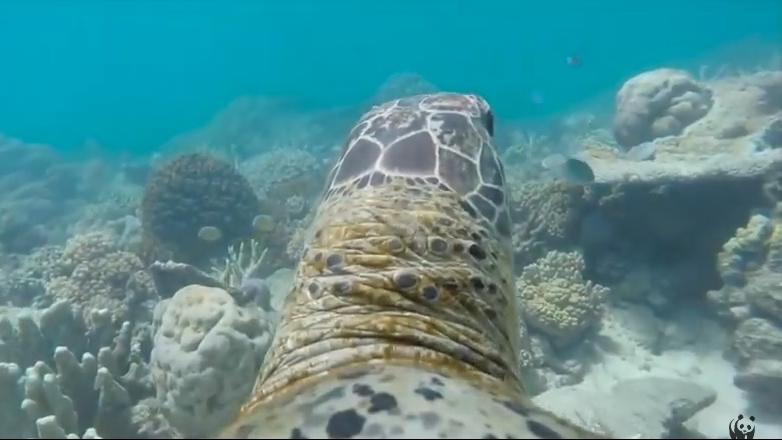 goproskildpadde.jpg
