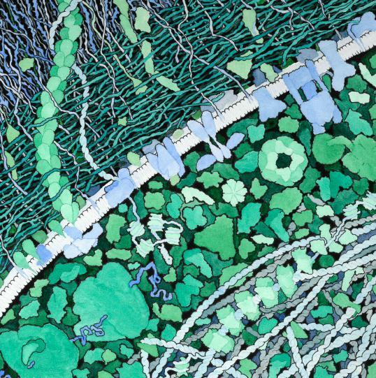 bakterie-ditte.jpg