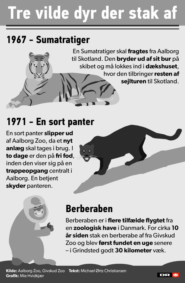 Grafik vilde dyr