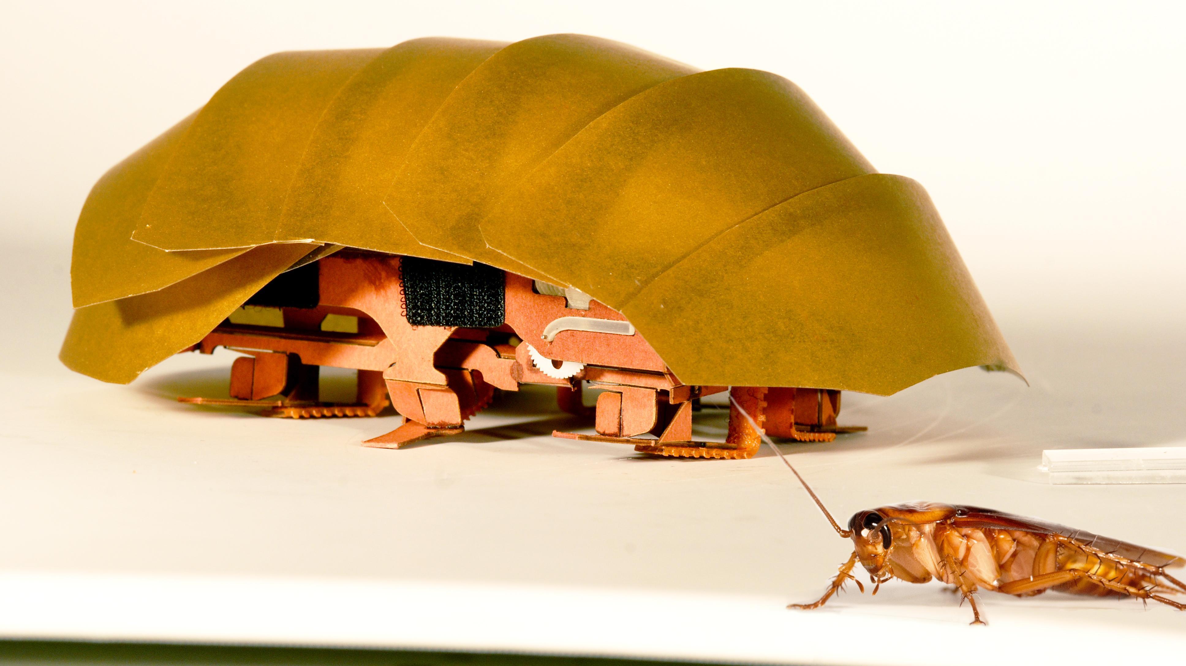 kakkerlakrobot.jpg
