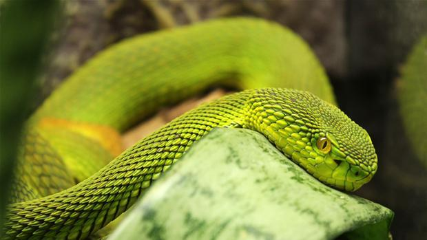 slange.jpg