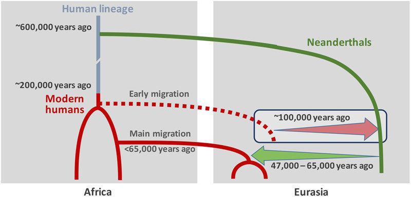 burde vi klone neandertalere.