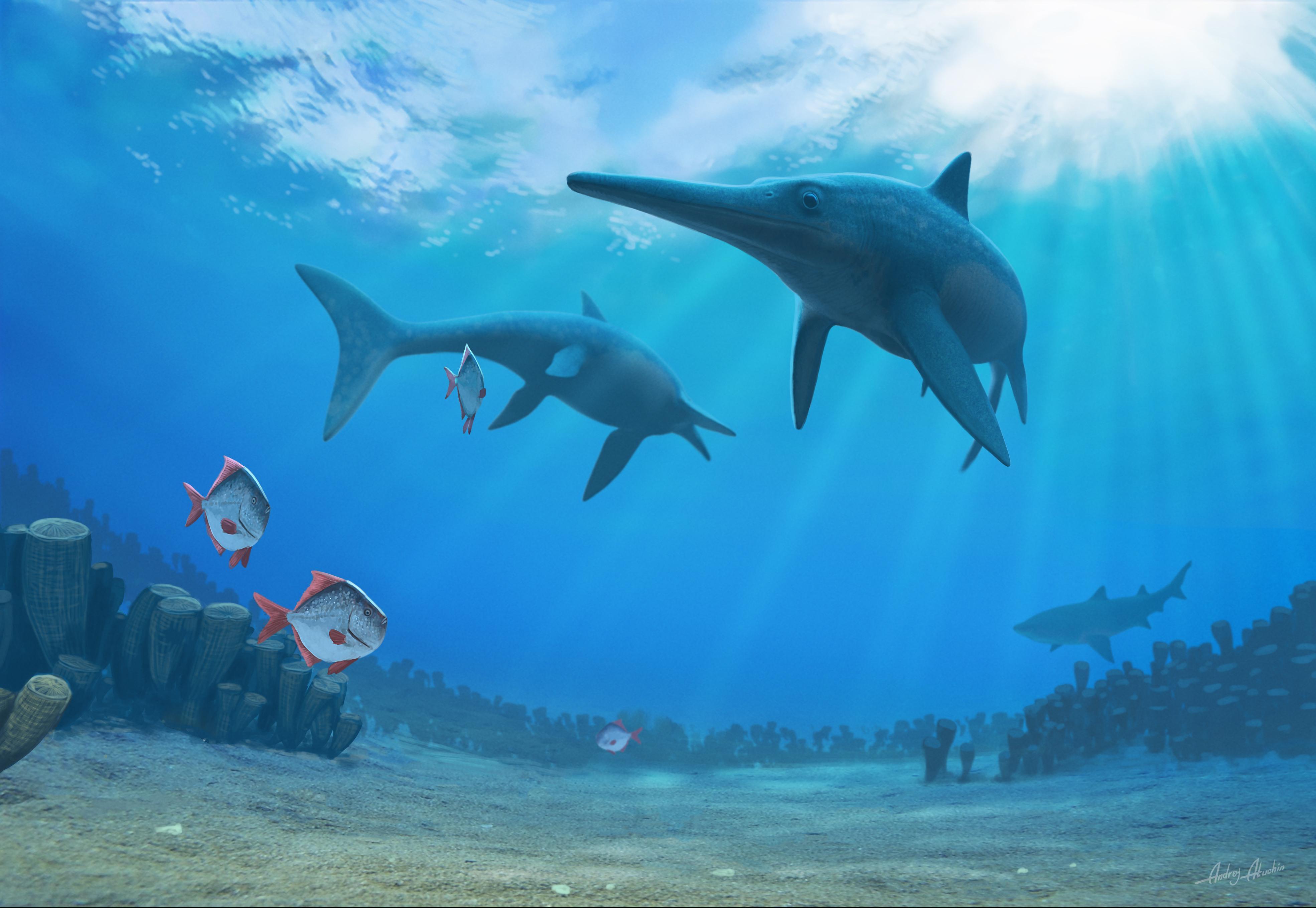 delfinus.jpg