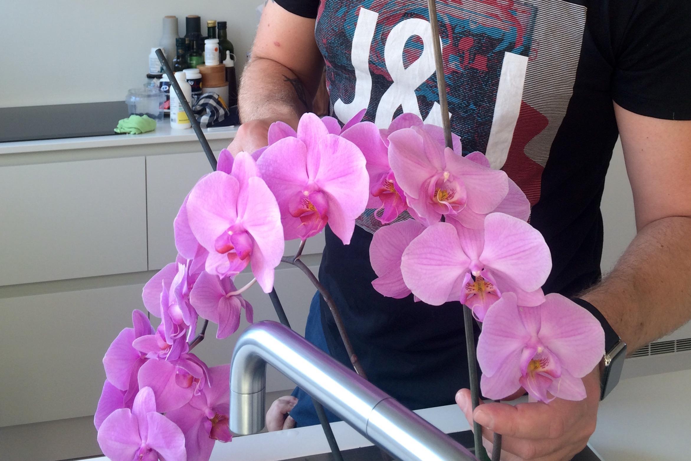 peter_vander_blomster.jpg