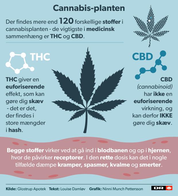 cannabis_medicin_planten_v04.png