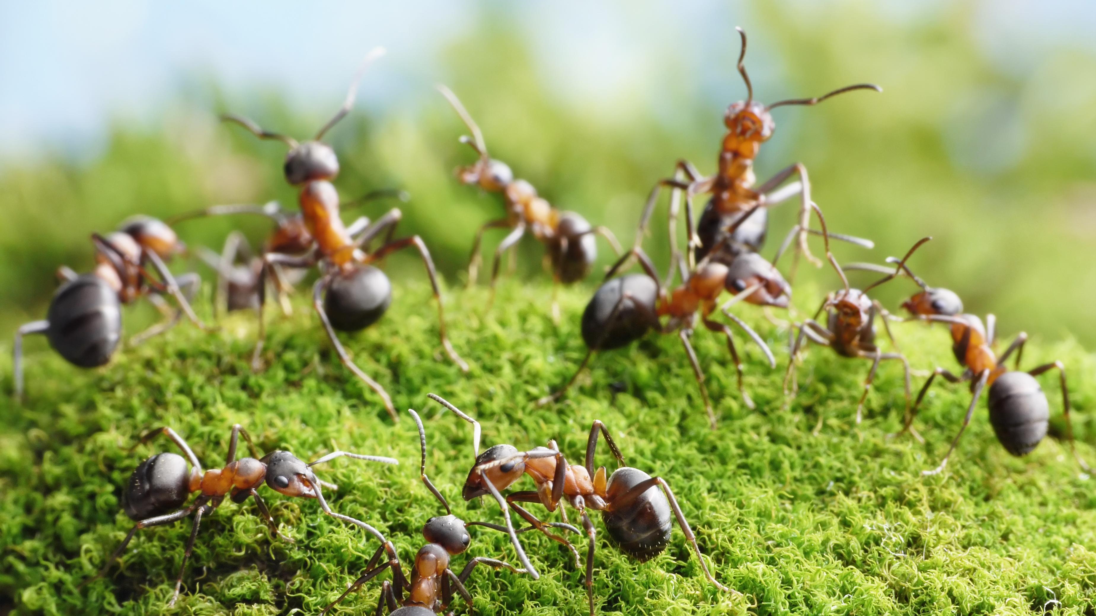 myrer.jpg