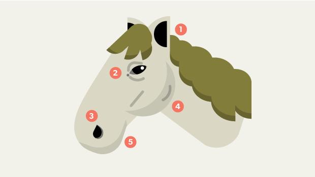 heste_teaser.png