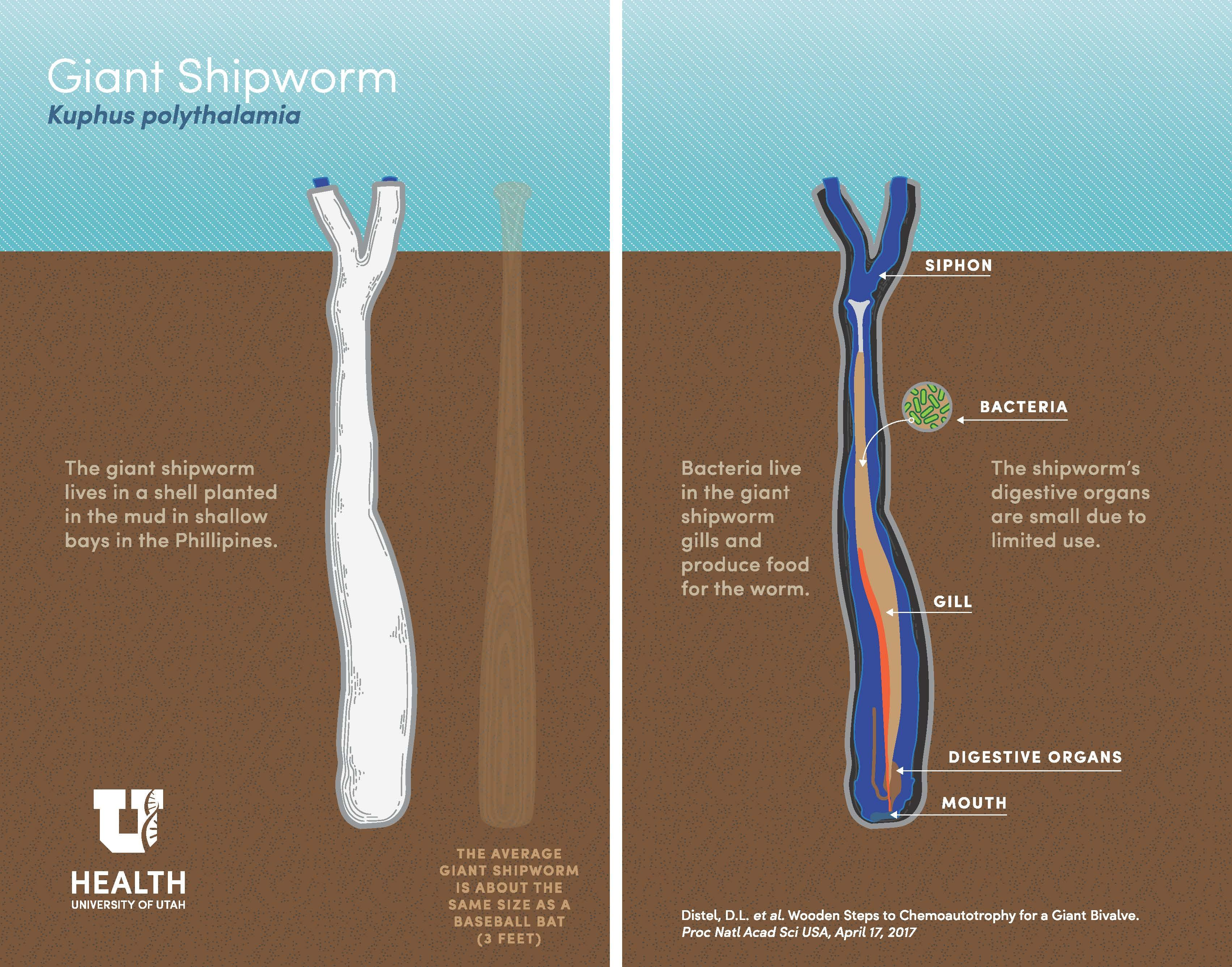 shipworm-infographic-logo.jpeg