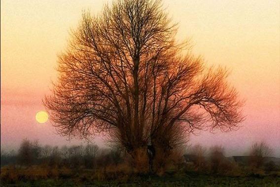 nature_by_tina.jpg
