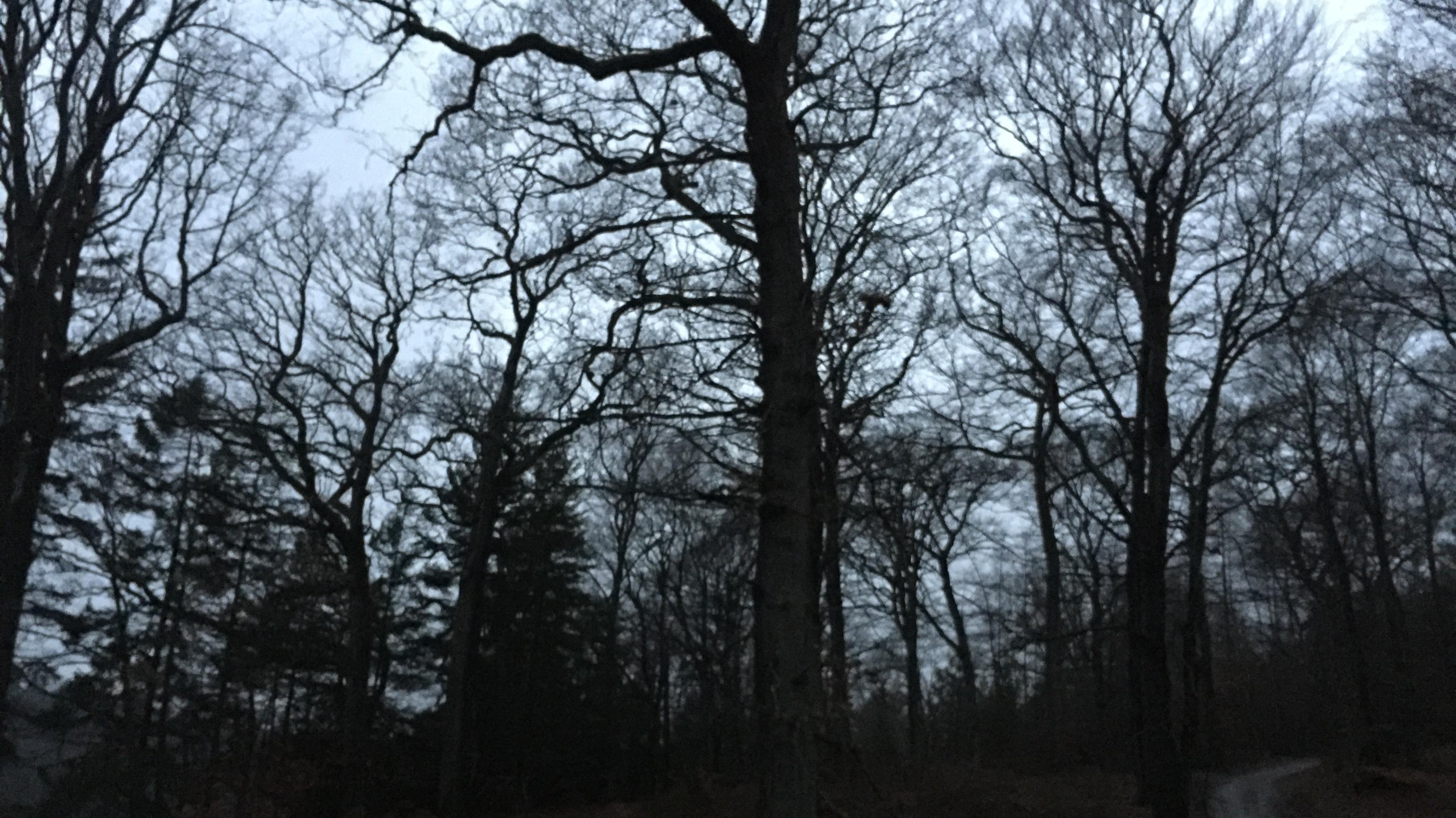 Træer i Silkeborg eg og gran