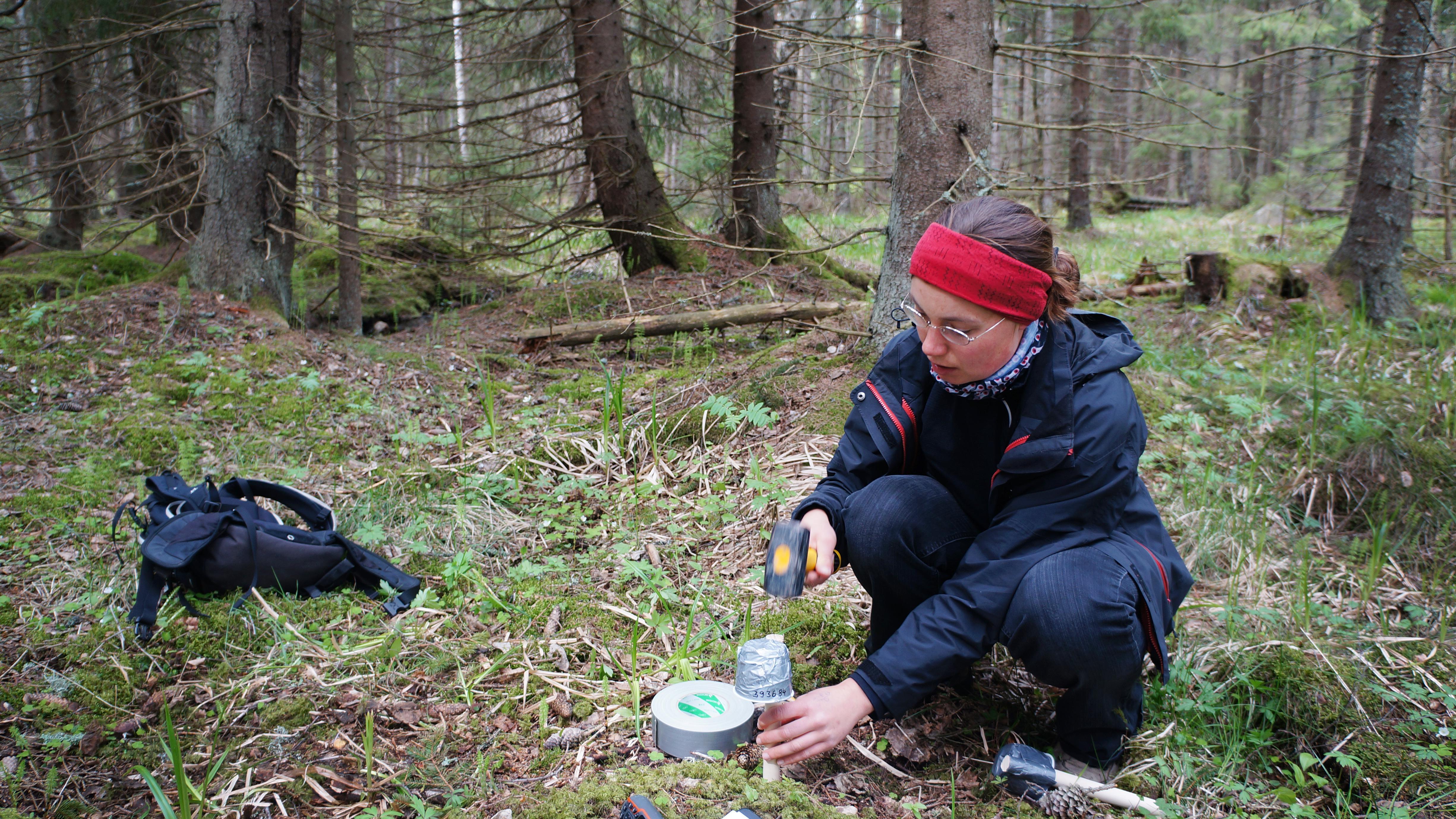 Forskerne placerer temperaturmålere og data-loggere i skovbunden.