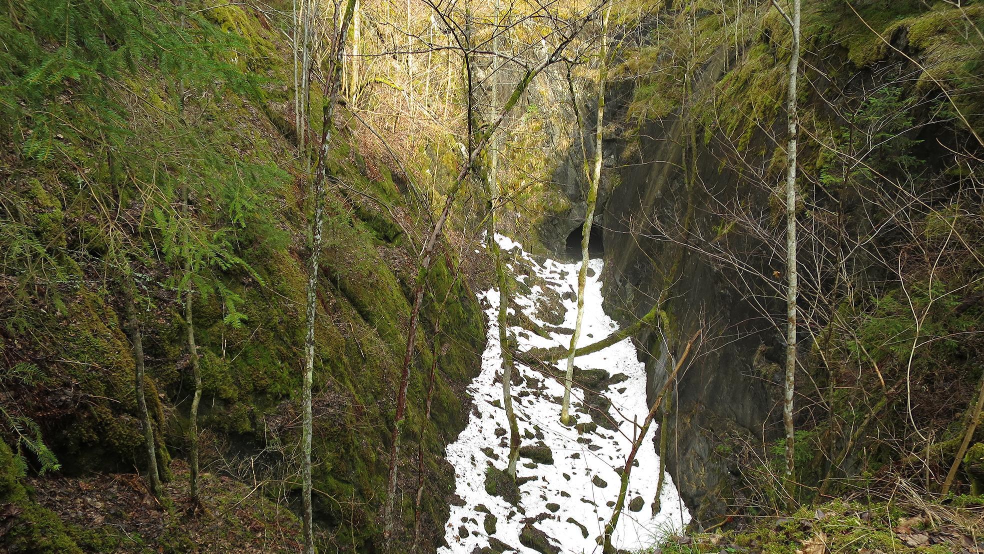 skogstemp4.jpg