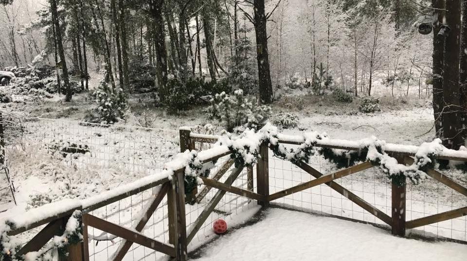 sne_3.jpg