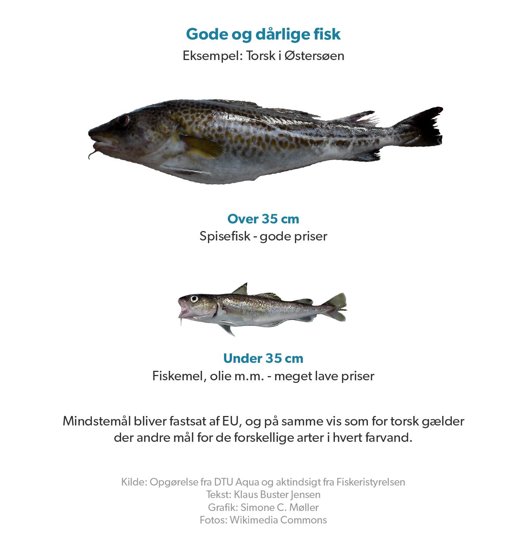 gode-daarlige-fisk-d.png