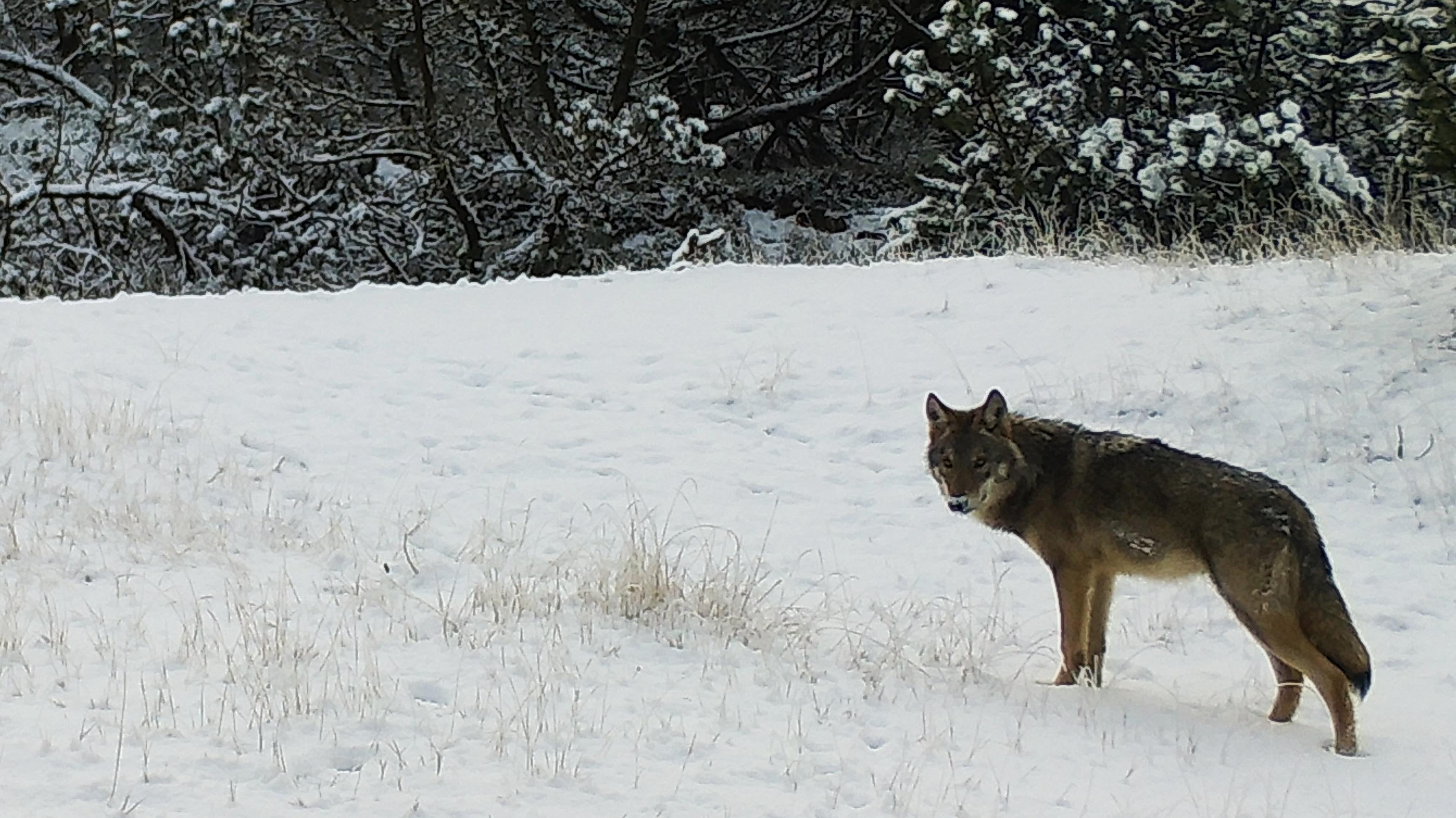 ulv december