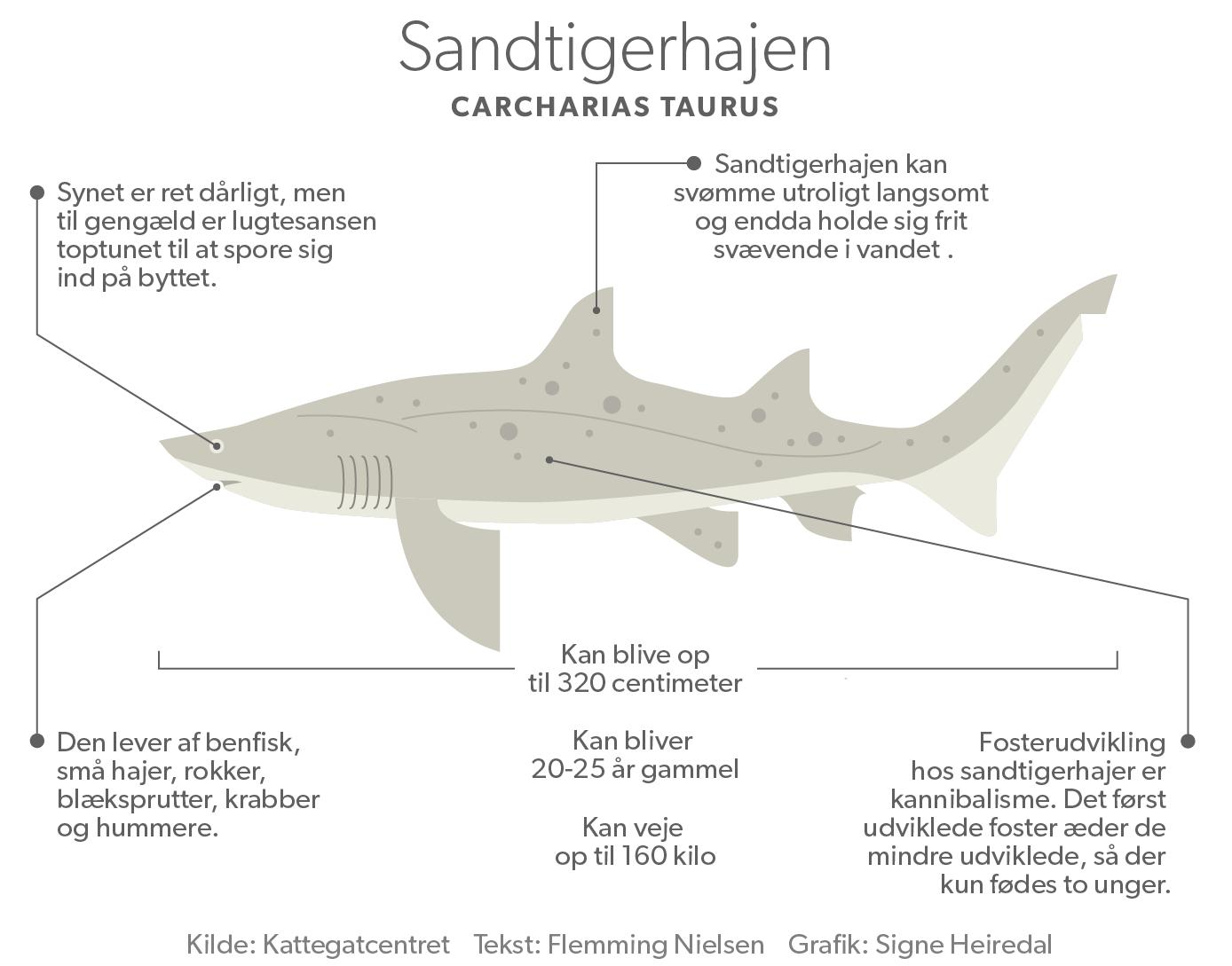 sandtigerhajen_694.png