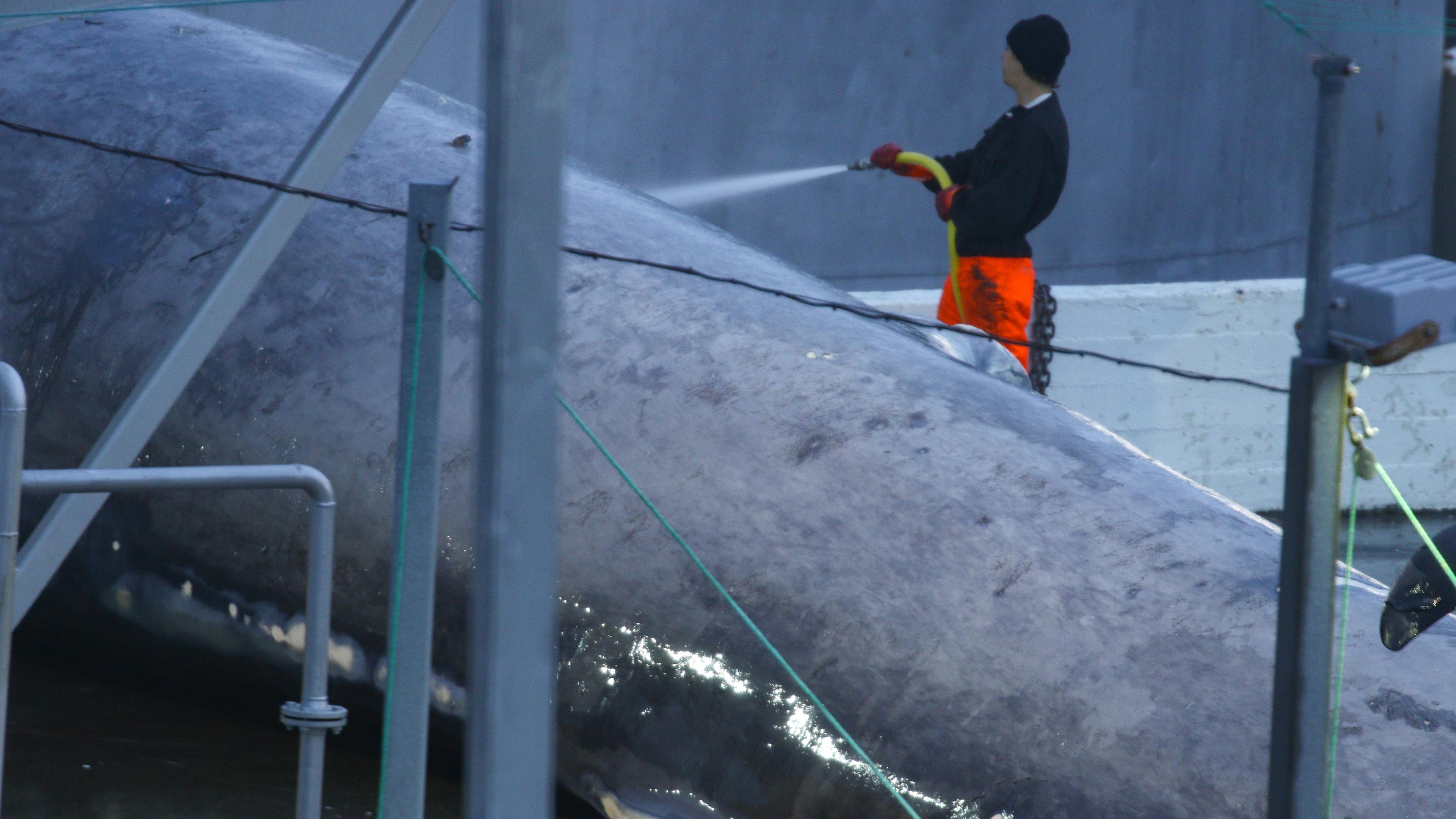 180707_blue_whale_4.jpg